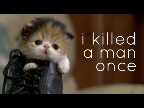 cats hate you a kitten sized teaser   youtube