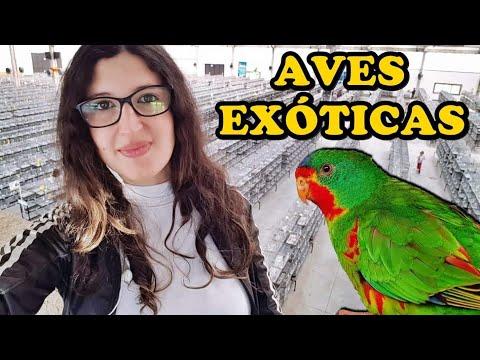   FOB 2019   - 68º CAMPEONATO DE AVES EXÓTICAS - UDP