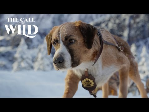 The Call of the Wild | New Lead Dog Clip