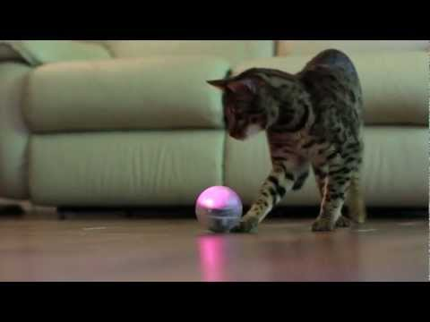 Video thumbnail of Sphero