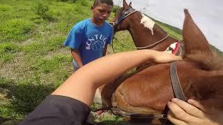 Pegando a Mula no Pasto
