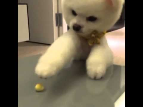 20140618 LOLLIPOP@F 敖犬 IG更新:「我要吃饅頭!!!!」 - YouTube