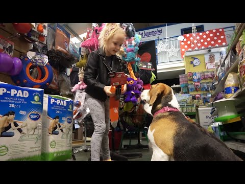 Cute Dogs Go Shopping at Pet Shop [Dogs Playing with Toys]