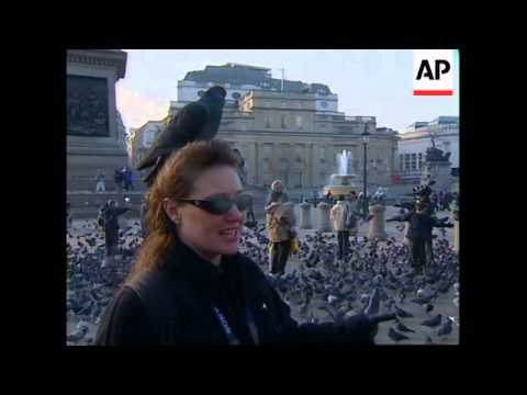 UK: LONDON: TRAFALGAR SQUARE PIGEONS (V)