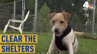 Dogs Saved From Nightmare NJ Hoarding Situation Get Adopted | Clear the Shelters