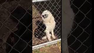 Скачать Beware Of Dog At The Gate 981938