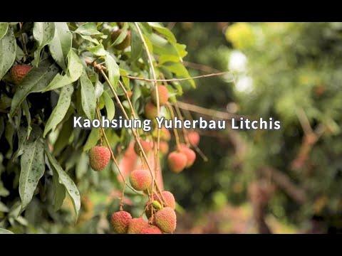Kaohsiung Yuherbau Litchis