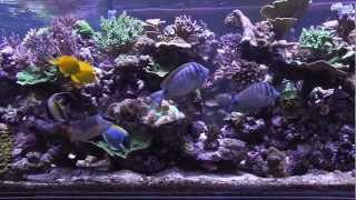 Peter's Fish Tank - Episode 3.4 - Eye Candy
