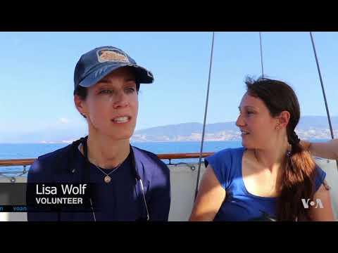 Citizen Scientists Chart Marine Mammals