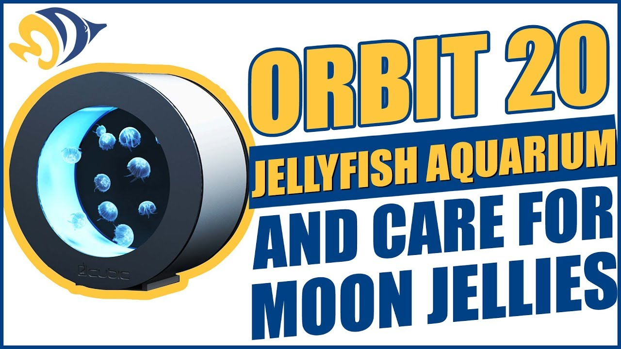 How to Set Up an Orbit 20 Jellyfish Aquarium and Care for Moon Jellies Thumbnail