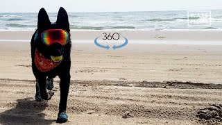Ride on Dog Along Ocean in 360 Video Looking for Sea Turtles in 2021 - Good Dogs Save Turtles!