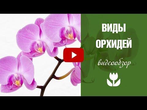Виды орхидей 🌺 Чем отличаются орхидеи ?
