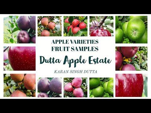 Apple varieties Fruit Samples - DUTTA APPLE ESTATE