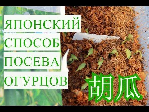 Японский Способ Выращивания Огурцов. Супер Быстрые Всходы!