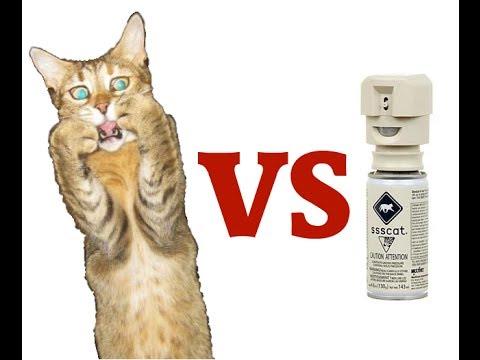 Cat Spray Light