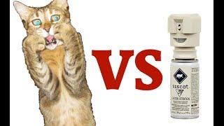 Cats VS Ssscat - Compilation