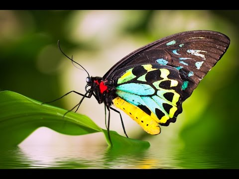 Beautiful Butterflies - relaxing music and nature sounds