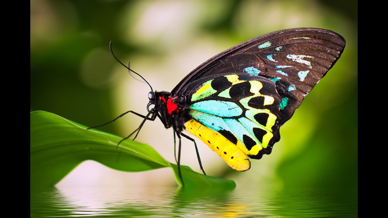 Beautiful Butterflies - relaxing music and nature sounds ...