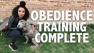 My Real Life | VLOG #70 - My Cane Corso Got Trained!