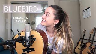Bluebird- Miranda Lambert (Dani Arribere Cover)
