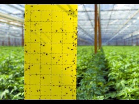 Ловушка садовая клеевая для отлова насекомых-вредителей!!! Эффективный способ!!!