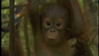 Orangutan Outreach PSA - Jorja Fox