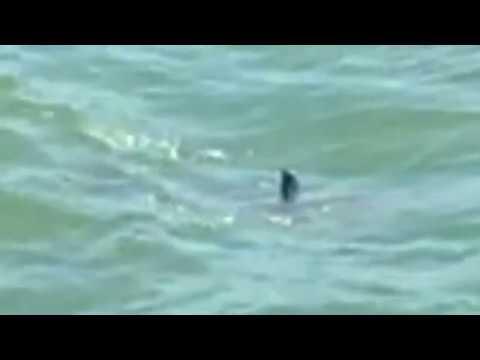 SHARK At MYRTLE BEACH 07 21 2017