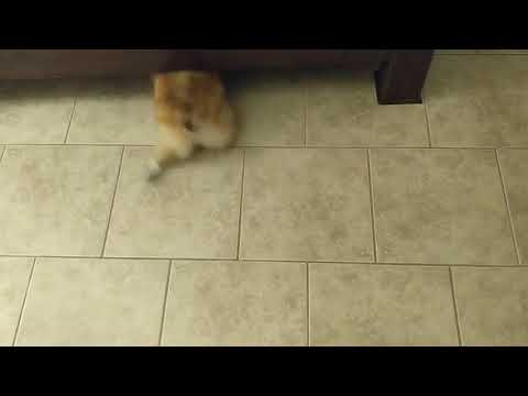 How to clean dust under the bed