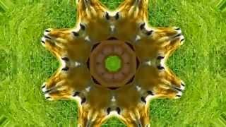 Kaleidoscope/Калейдоскоп