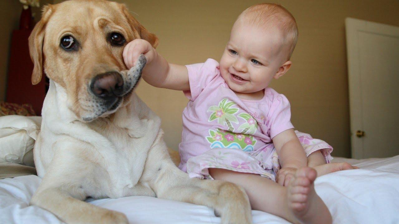 Видео Смешное про Животных Смотреть Бесплатно |  Дети и Животные 2019