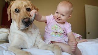 Дети и животные 2016