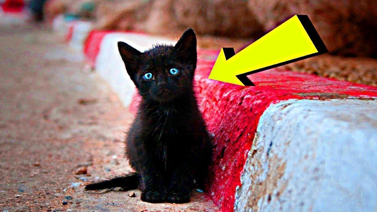 الكل هرب من هذه القطة الصغيرة السوداء ، حتى قابلتها طفلة صغيرة شاهد ماحدث
