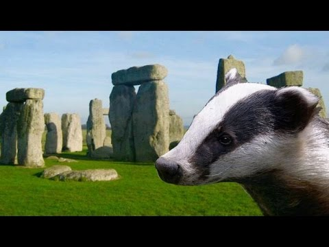 Stonehenge Secret Burial Site Discovered by Badger?!?