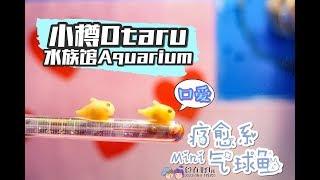 【旅游Vlog】小樽水族馆 Otaru Aquarium:和企鹅一起自拍