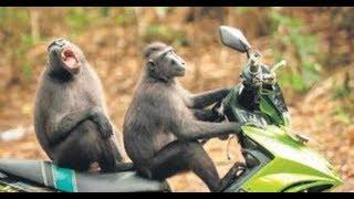 KOMİK HAYVANLAR GÜLMEKTEN KARNINIZ AĞRIYACAK !!! -  Funny Animals