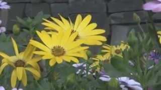 Notturno Op.61 Number 7  by Mendelssohn