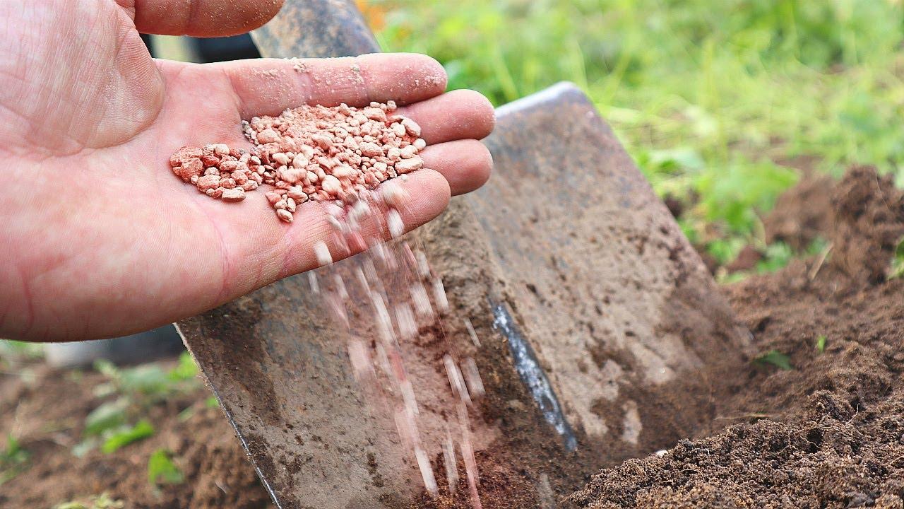 Расскажу как применяю калимагнезию осенью для всего огорода. Всегда с хорошим урожаем.