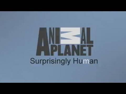 Animal Planet: Surprisingly Human