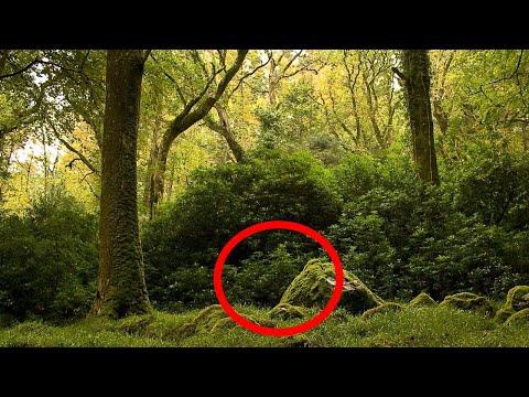 Лесник обнаружил в лесу мешок. То, что в нем было, изменило его жизнь НАВСЕГДА!