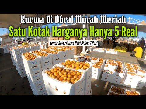 KEBUN KURMA DIMADINAH DISERBU JAMAAH UMROH INDONESIA.
