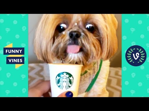 TRY NOT to LAUGH or GRIN: Funny Animals Vines Compilation 2017 | Funny Vines Videos