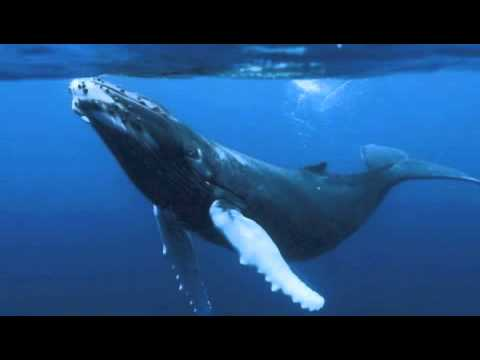 WHALE COMMUNICATION