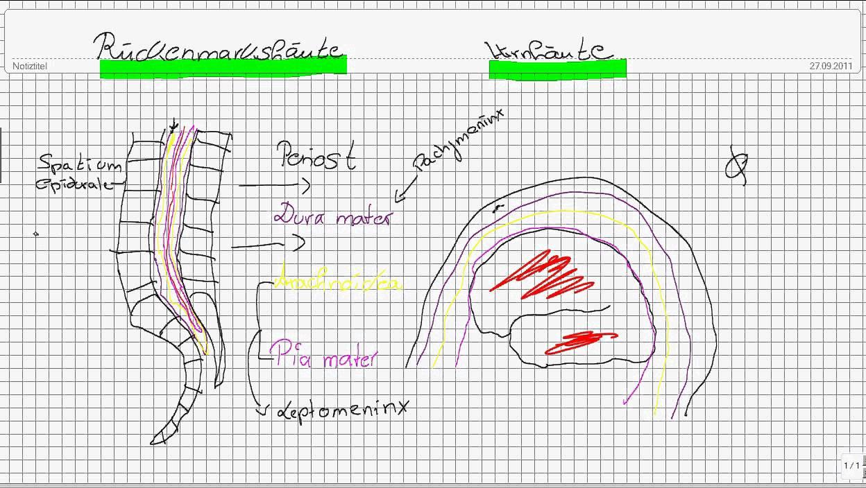 Einführung in die Neuroanatomie Teil 2 - Hirnhäute - YouTube
