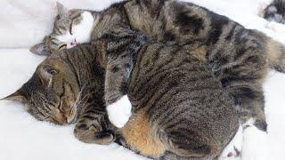 日向ぼっこするねこ。-Cats basking in the sun.-