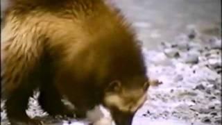 Свободный охотник (клип).avi