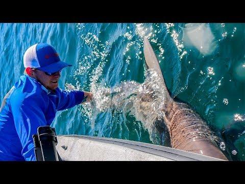 Offshore Fishing - HUGE Sandbar SHARK!