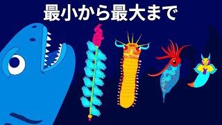 海の奥深さを思い知らされる海の生き物50+選