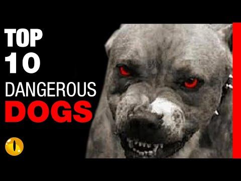 TOP 10 DANGEROUS DOG BREEDS