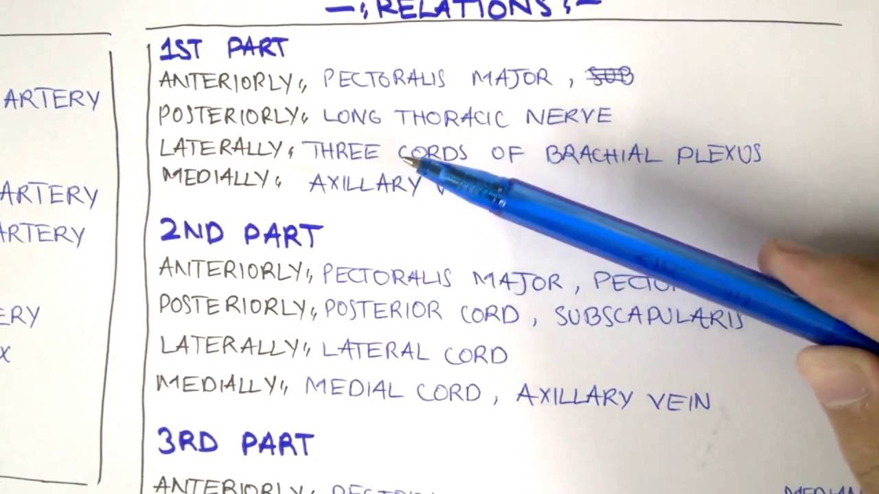 Anatomy Axillary Artery Youtube