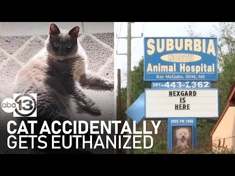 Lynch and Taco - Family Is Stunned After Their Cat Is Accidentally Euthanized During Checkup